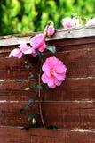 A flor cresce Fotos de Stock Royalty Free