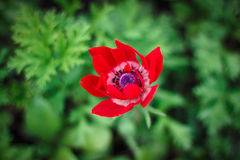 Flor crescente Fotografia de Stock Royalty Free