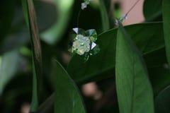 Flor cristalina macra Fotos de archivo