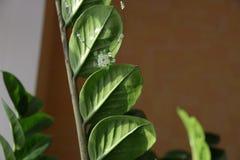 Flor cristalina verde Imagen de archivo libre de regalías