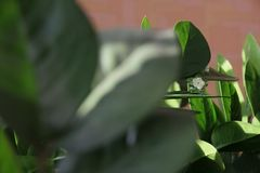 Flor cristalina verde Foto de archivo