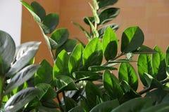 Flor cristalina verde foto de archivo libre de regalías