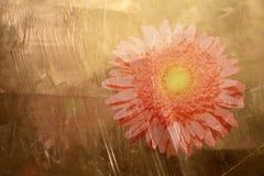 Flor cristalizada Imágenes de archivo libres de regalías