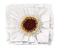 Flor cuadrada del gerbera aislada en blanco Foto de archivo
