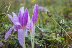 Flor cubierta de rocio Fotografía de archivo