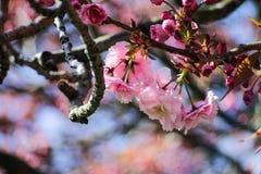 Flor da árvore fotografia de stock
