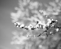 Flor da árvore da flor foto de stock