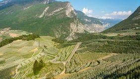 Flor da árvore de Apple Pomares de Apple no tempo de mola no campo não do vale Val di Non, Trentino Alto Adige, AIE do norte imagens de stock
