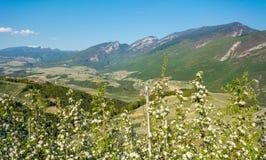Flor da árvore de Apple Pomares de Apple no tempo de mola no campo não do vale Val di Non, Trentino Alto Adige, AIE do norte imagens de stock royalty free