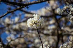 A flor da árvore foto de stock royalty free