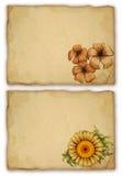 Flor da aguarela ilustração do vetor