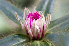 Flor da alfazema e da flor branca Fotos de Stock Royalty Free