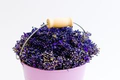 Flor da alfazema na cubeta roxa Fotografia de Stock