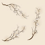 Flor da ameixa com linha projeto Imagens de Stock Royalty Free