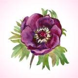 Flor da aquarela Foto de Stock Royalty Free