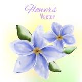 Flor da aquarela Fotografia de Stock Royalty Free