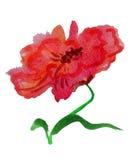 Flor da aquarela ilustração royalty free