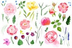 Flor da aquarela ajustada sobre o fundo branco Imagem de Stock Royalty Free