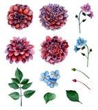 A flor da aquarela floresce o vetor Foto de Stock Royalty Free