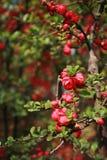 flor da begônia imagem de stock royalty free