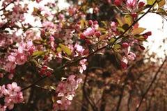 flor da begônia fotografia de stock