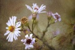 Flor da bela arte Imagem de Stock Royalty Free