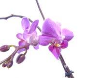 Flor da beleza Foto de Stock Royalty Free