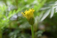 Flor da beleza Fotografia de Stock