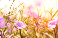 Flor da beleza no por do sol foto de stock