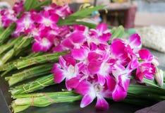 Flor da Buda Foto de Stock Royalty Free