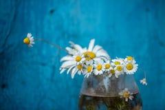 Flor da camomila Foto de Stock Royalty Free
