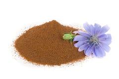 Flor da chicória e pó da chicória imediata isolados em um fundo branco Intybus do Cichorium Imagens de Stock