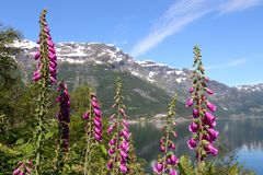 Flor da digital Fotografia de Stock Royalty Free