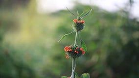 Flor da flor do cardo da Botânica vídeos de arquivo