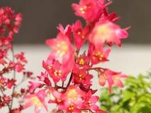 Flor da elegância Foto de Stock Royalty Free