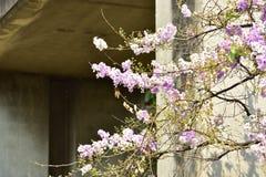 Flor da flor em sua árvore na primavera Fotos de Stock