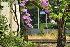 Flor da flor em sua árvore na primavera Foto de Stock