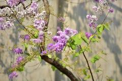 Flor da flor em sua árvore na primavera Imagem de Stock