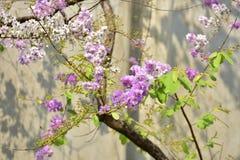 Flor da flor em sua árvore na primavera Fotografia de Stock
