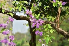 Flor da flor em sua árvore na primavera Fotos de Stock Royalty Free