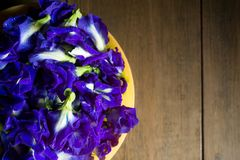 Flor da ervilha de borboleta ou da ervilha azul na tabela de madeira marrom, vista superior Fotografia de Stock Royalty Free