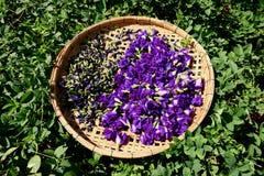 A flor da ervilha de borboleta seca na cesta para a mistura com água quente a beber fotografia de stock