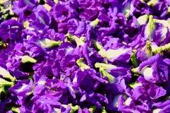 A flor da ervilha de borboleta seca na cesta para a mistura com água quente a beber fotos de stock royalty free