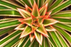 Flor da estrela com folhas verdes Fotos de Stock Royalty Free