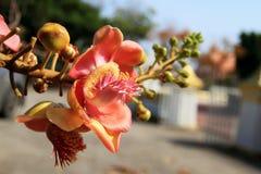 Flor da flor Imagens de Stock Royalty Free