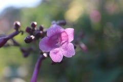 Flor da flor imagens de stock