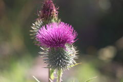 Flor da flor Foto de Stock