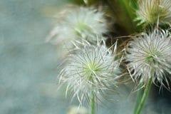 Flor da flor da flor Imagem de Stock