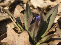 Flor da floresta da mola Fotos de Stock