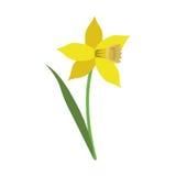 Flor da folha da flor do narciso amarelo ilustração do vetor